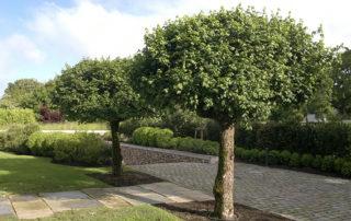 Baumkontrolle - Überprüfung der Verkehrsicherheit