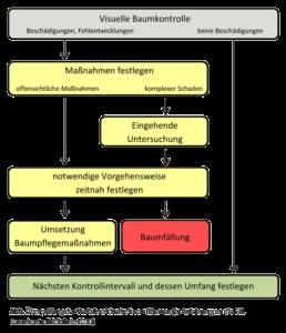 Visuelle Baumkontrolle