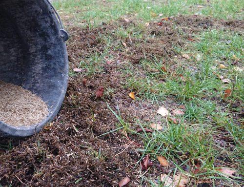 Rasen sanieren/regenerieren
