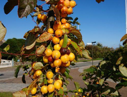 Fruchtschmuck, Blüte, Blattfarbe – der Herbst hat viel zu bieten