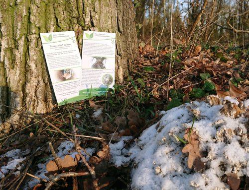 Neue Flyer zum Thema Baum