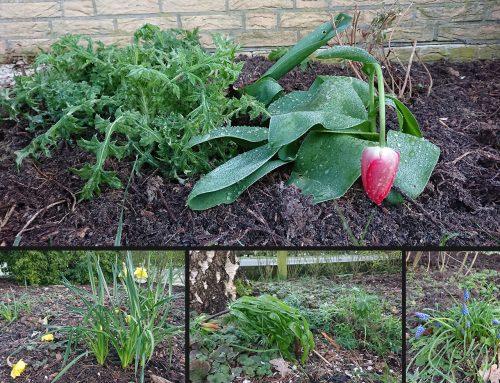 Spätfrost – schadet das den Pflanzen?
